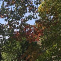 下直瀬八幡神社境内の紅葉(R1)